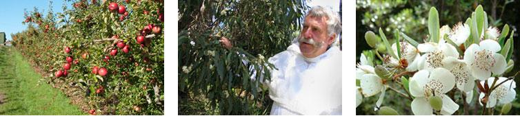 crop pollination services